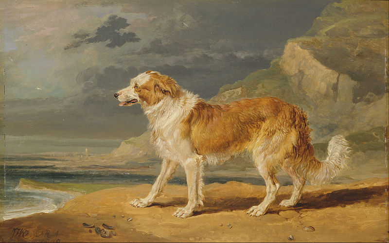 Image Result For Chris Dogs
