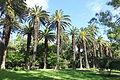 Jardim Botânico Tropical - Lisbon, Portugal - DSC06615.JPG