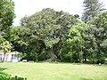 Jardim José do Canto - rubberboom.jpg