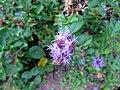 Jardim de Plantas Medicinais Jani Pereira (11).jpg