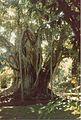 Jardin de Pamplemousses (3001703032).jpg