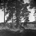 Jean Sibelius juurituolissaan Ainolan alueen rajamailla, - 1940-1945, (D2005 167 6 85) Suomen valokuvataiteen museo.jpg
