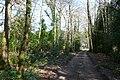 Jubilee Trail near Moigne Combe - geograph.org.uk - 1218917.jpg