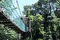 KL Forest Eco-Park Canopy Walk 4.jpg