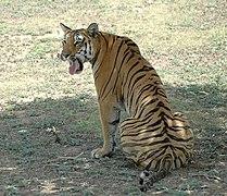 Karmazari Pench National Park 13.jpg