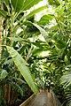 Kew Gardens 103.jpg