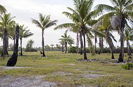 Kiritimati or Christmas Island (14190109048).jpg
