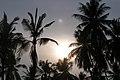 Koh Tarutao, Thailand, Palms and the sun.jpg