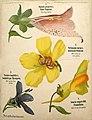 Léopold Kny et Albert Peter-Planches botaniques murales (1).jpg