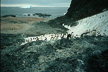 Lagotellerie Island penguin colony.jpg