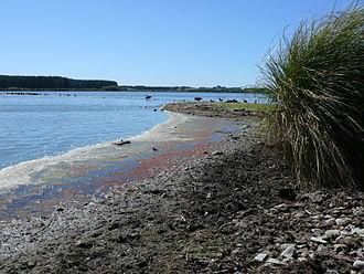 Lake Horowhenua - The shore of Lake Horowhenua