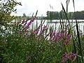 Lake Silach - panoramio (2).jpg