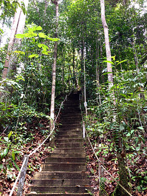 Lambir Hills National Park - One of the many hiking trails in Lambir Hills National Park.