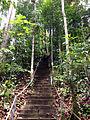 Lambir-Hills-Hiking-Trail.jpg