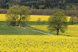 Landschaftsschutzgebiet Steegen in Sachsen bei Niederwürschnitz..2H1A8730WI.jpg