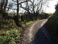 Lane to Waterbrooks Farm - geograph.org.uk - 619660.jpg