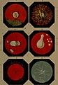 Leçons sur l'exploration de l'oeil - et en particulier sur les applications de l'ophthalmoscope au diagnostic des maladies des yeux (1863) (14597772288).jpg