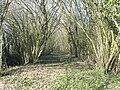 Le Tremblay - Chemin de la Tuace.JPG