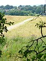 Leatherhead Downs - geograph.org.uk - 1395123.jpg