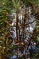 Leaves and reflections in a mossy puddle 5.jpg