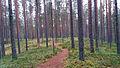 Leivonmäki national park 3.jpg