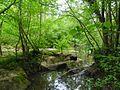 Les Îles de Pont de Ligugé, site naturel préservé.jpg