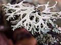 Lichens (10493516173).jpg