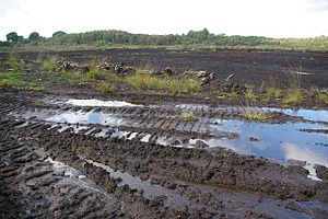 Lindow Man - The area of Lindow Moss where Lindow Man was discovered