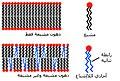 Lipid unsaturation effect-ar.jpg