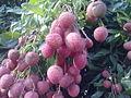 Litchi fruit.jpg