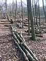 Logging on Chinthurst Hill - geograph.org.uk - 1765896.jpg