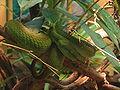 London Zoo 01027.jpg
