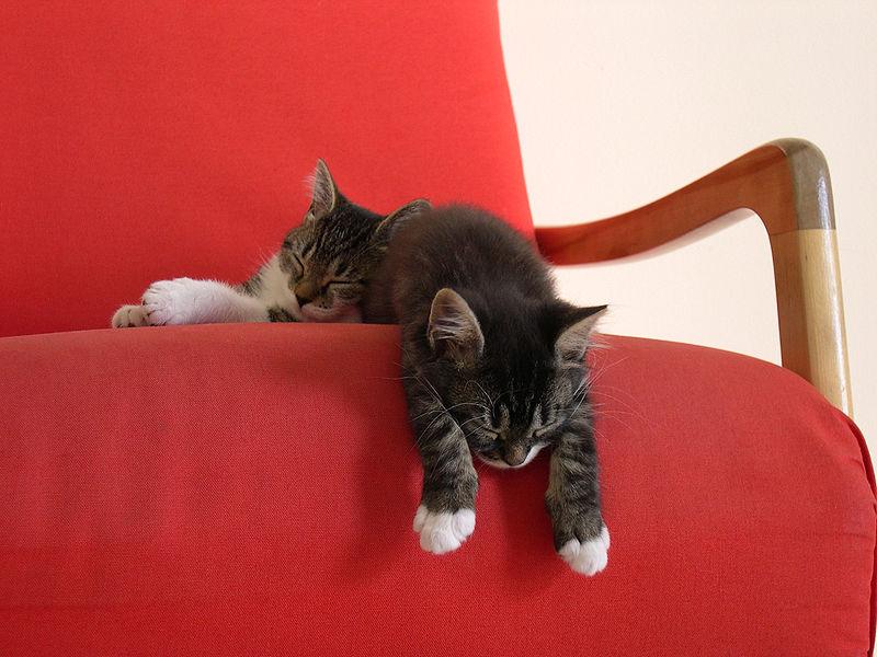 File:Louis-&-Chanel-taking-a-nap.jpg