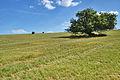 Louky na kopci zápdně od Strání, okres Uherské Hradiště.jpg