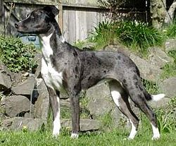 Lucy the Catahoula Leopard Dog.jpg