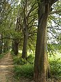 MB-Monza-parco-sentiero-001.jpg