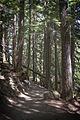 MRNP — Grove of the Patriarchs Nature Trail — 001.jpg