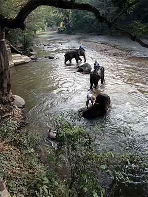 Ping River - Image: Mae ta mann 09