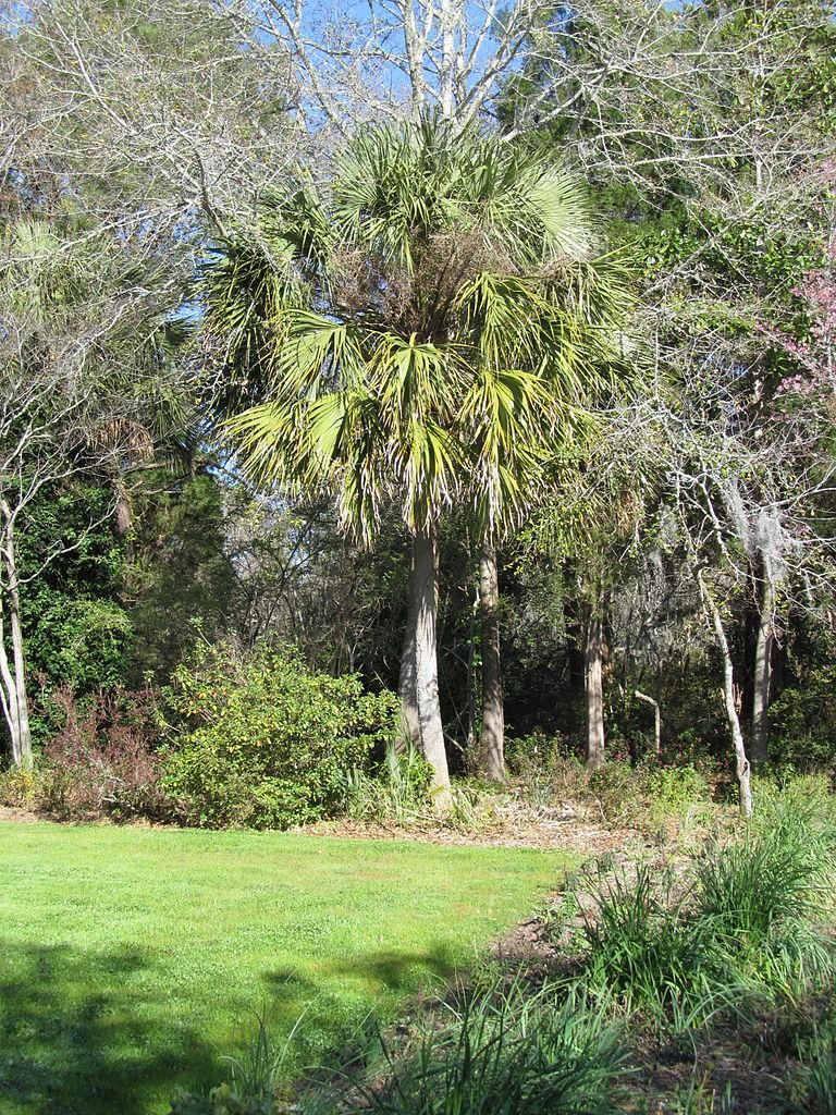 File Magnolia Plantation And Gardens Charleston South Carolina 8555393579 Jpg Wikimedia