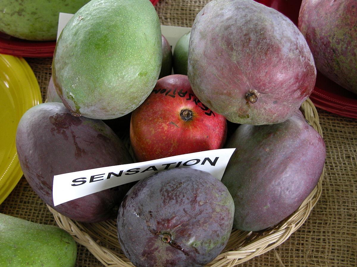 Sensation Mango Wikipedia