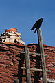 Mary Jane Colter Buildings Hopi House with Raven - 1.jpg