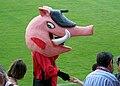 Mascota del Mirandés - Jabato.jpg
