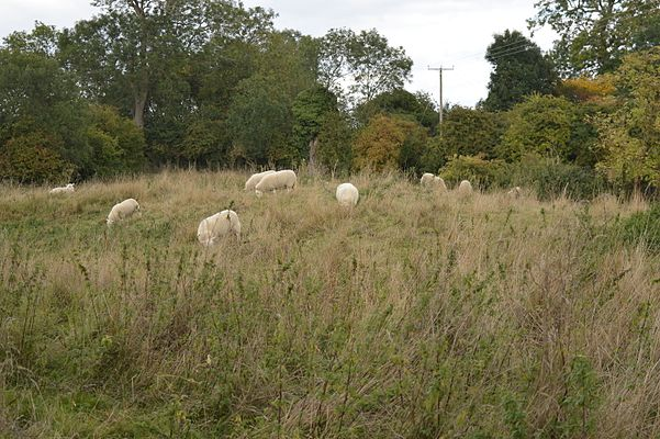 Maulden Church Meadow