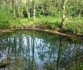 McConnell Springs, Blue Hole spring.jpg