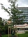 Memorial Tree - panoramio (2).jpg