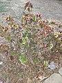 Messy Flowers.jpg
