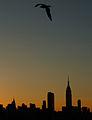 Midtown Manhattan dawn.jpg