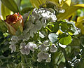 Mixed Flowers (5964336477).jpg