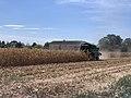 Moissonnage du maïs en septembre 2020, rue des Andrés, Saint-Maurice-de-Beynost, Ain, France (1).jpg