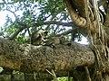 Monkey Spa 1.jpg